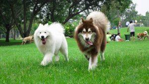 Professional dog training address