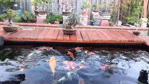 Top 10 dịch vụ thiết kế hồ cá koi uy tín chuyên nghiệp tại Tphcm