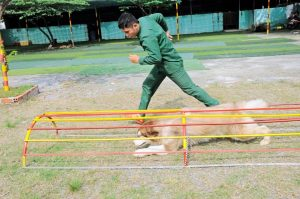 Kinh nghiệm huấn luyện chó cực kỳ đơn giản tại nhà