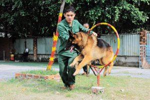 Trung tâm huấn luyện chó cảnh khuyển Trung Đức